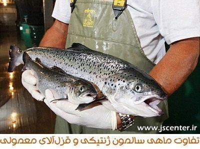 ماهی سالمون ژنتیکی و قزل آلای معمولی