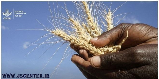 CGIAR شبکه کشاورزی راکفلرها